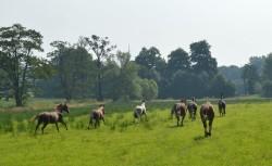 Vakantie voor de paarden & pony's